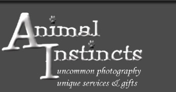 Animal Instincts Pet Photography Located in Newburg PA